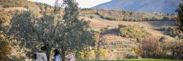 """Grande successo di pubblico per le iniziative del terzo fine settimana di Frantoi Aperti in Umbria  Ecco i commenti degli amministratori e i vincitori del premio """"Oro di Agilla"""""""