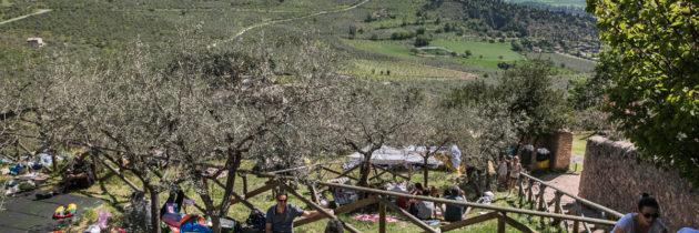 """Grande successo di pubblico per l'undicesima edizione di  """"Pic & Nic a Trevi, arte, musica e merende tra gli olivi"""""""