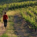 Le Strade del Vino e dell'Olio dell'Umbria sollecitano il consiglio regionale: più attenzione per le reti stabili che da anni promuovono un settore strategico per l'offerta turistica regionale