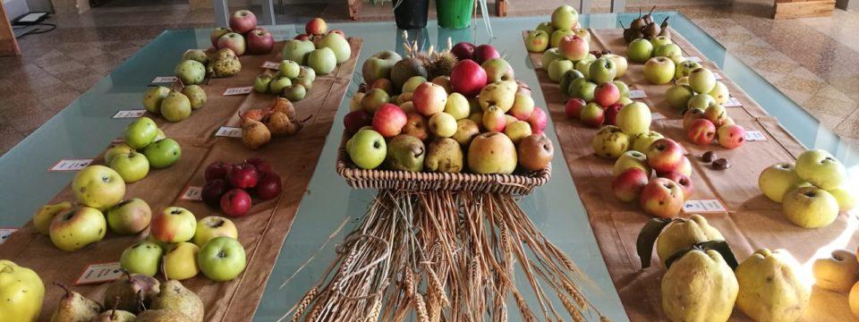 """""""Coltiviamo la Biodiversità 2018""""- La Mostra Pomologica dedicata ai frutti di varietà locali antiche umbre"""