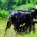 """Il Parco Tecnologico Agroalimentare dell'Umbria 3A-PTA ad AgriUmbria, sabato 30 marzo 2019, per l'incontro """"Il Valore Della Biodiversità Nella Zootecnia Umbra"""""""