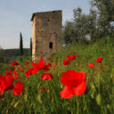 """Il 27 e 28 aprile 2019 torna, in Umbria, """"Pic & Nic a Trevi. Arte, musica e merende tra gli olivi"""""""