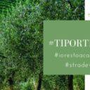 Umbria – Il coordinamento delle strade dei Vini e dell'Olio dà vita al video contest #Tiportiamolumbria