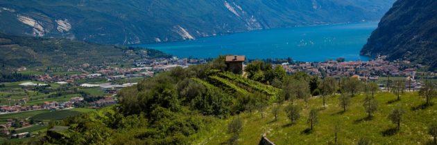 Svelati gli oli del Trentino Alto Adige finalisti dell'Ercole Olivario 2020
