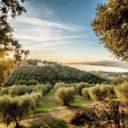 Svelati gli oli dell'Umbria finalisti del Premio Nazionale Ercole Olivario 2020