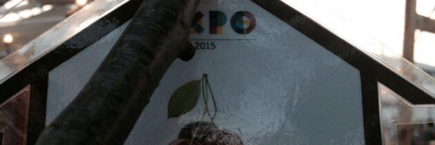 La Strada dell'Olio a Milano per Expo e al Mercato metropolitano