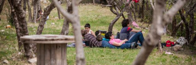 """""""Pic & Nic a Trevi, arte, musica e merende tra gli olivi"""". Al via la decima edizione, sabato 22 aprile, con tante iniziative in programma"""