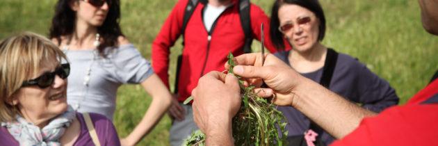 """Al """"Pic & Nic a Trevi"""" dal 22 al 25 aprile focus sulle erbe spontanee mangerecce: come riconoscerle e come cucinarle"""