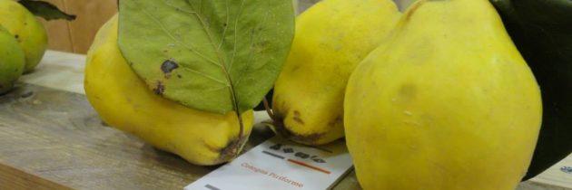 """Mercoledì 20 maggio 2020: webinar """"Agro – Biodiversità, agricoltori custodi e sostenibilità delle imprese agricole in aree montane: il caso della Valnerina"""""""