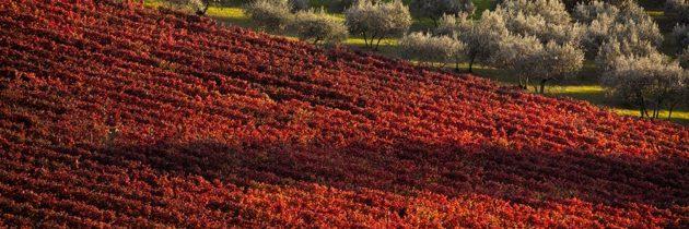 """Un plauso dalla Federazione Italiana delle Strade del Vino, dell'Olio e dei Sapori al Premier Draghi sul """"turismo"""" come volano dell'economia Italiana"""